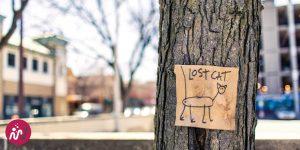 affiche de recherche d'un chat avec un titre